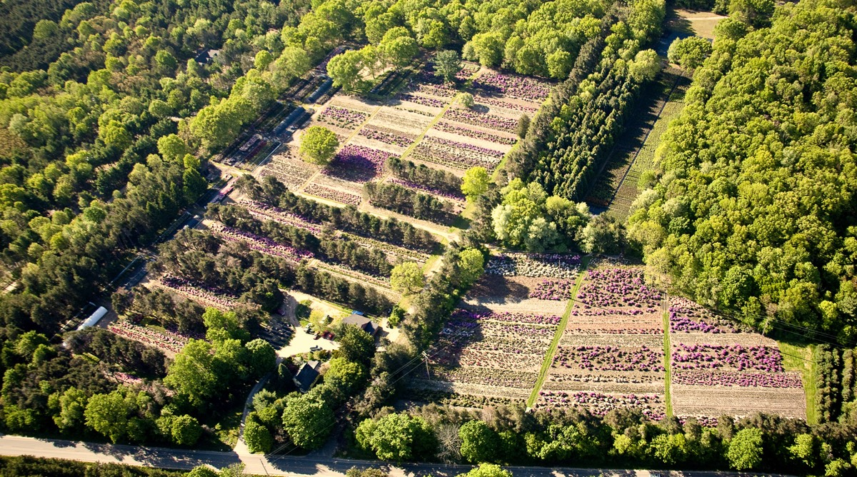 aerial picture of nursery